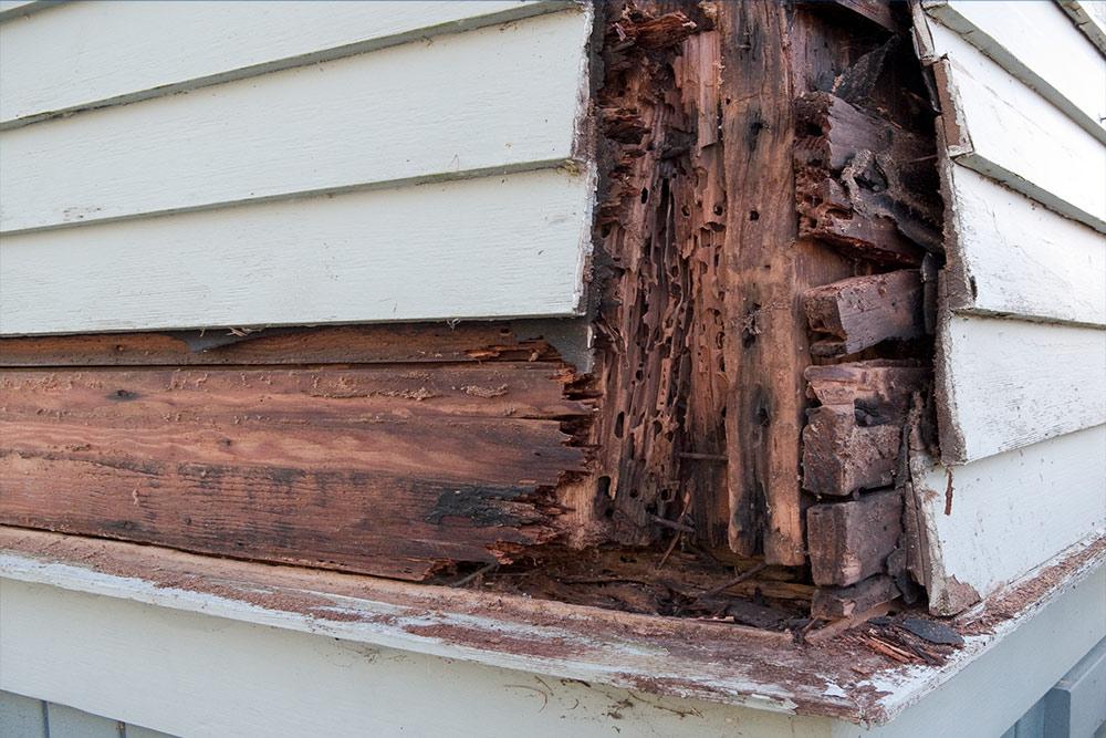 Apartment Dry Rot Repair in Portland Oregon